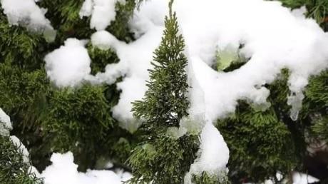 雪654x3594.jpg